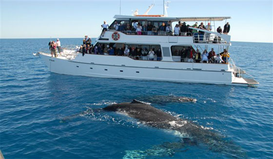 Whale Watching On Catamaran - Sib