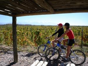 Bike and wineries 2