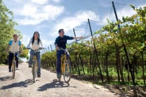 Bike and wineries 3