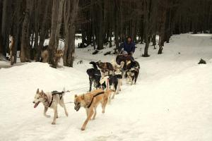 Sled Dogs in Ushuaia  2