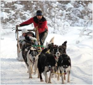 Sled Dogs in Ushuaia 3